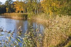 Het Landschap van de herfst bij het meer Stock Foto's
