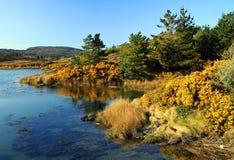 Het landschap van de herfst in Ierland Stock Foto