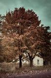 Het landschap van de herfst Kleurrijke bladeren in bos Stock Foto's