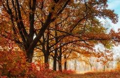 Het landschap van de herfst Kleurrijke bladeren in bos Stock Afbeeldingen