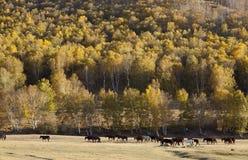 Het landschap van de herfst Kleurrijke bladeren in bos Royalty-vrije Stock Afbeeldingen