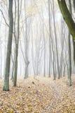 Het landschap van de herfst Kleurrijke bladeren in bos Royalty-vrije Stock Afbeelding