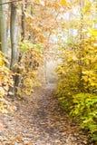Het landschap van de herfst Kleurrijke bladeren in bos Royalty-vrije Stock Foto