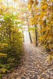 Het landschap van de herfst Kleurrijke bladeren in bos Stock Afbeelding