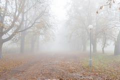 Het landschap van de herfst Kleurrijke bladeren in bos Royalty-vrije Stock Foto's