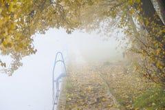 Het landschap van de herfst Kleurrijke bladeren in bos Stock Fotografie