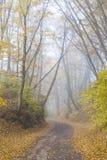 Het landschap van de herfst Kleurrijke bladeren in bos Royalty-vrije Stock Fotografie