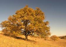 Het landschap van de herfst met boom Royalty-vrije Stock Afbeelding