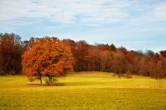 Het landschap van de herfst met geïsoleerdei boom Stock Afbeelding
