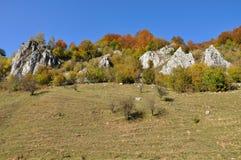 Het landschap van de herfst met kleurrijk bos Royalty-vrije Stock Afbeeldingen