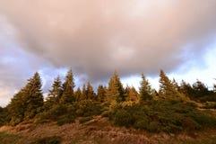 Het landschap van de herfst met kleurrijk bos Stock Foto