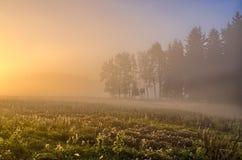 Het landschap van de herfst met mist Stock Afbeelding