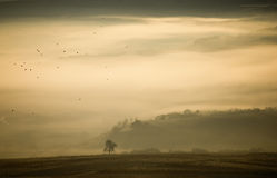 Het landschap van de herfst met mist, boom en vogels Royalty-vrije Stock Afbeelding