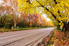 Het landschap van de herfst met weg Stock Foto