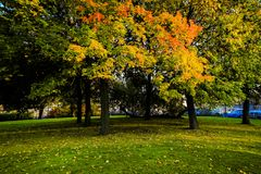 Het landschap van de herfst in het park Stock Foto