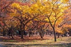 Het landschap van de herfst in het park Seoel, Zuid-Korea Royalty-vrije Stock Afbeelding