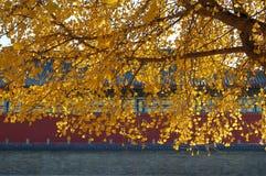 Het landschap van de herfst in Peking Royalty-vrije Stock Afbeelding