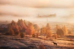 Het landschap van de herfst in Rusland Ochtendaard royalty-vrije stock afbeelding