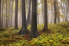 Het landschap van de herfst van een bos met geel doorbladert stock foto