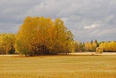 Het landschap van de herfst in Zweden Stock Foto