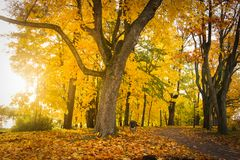 Het landschap van de de herfstaard in kleurrijk park Geel gebladerte op bomen in steeg Daling van oktober royalty-vrije stock fotografie