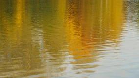 Het landschap van het de herfstdaglicht in water wordt weerspiegeld dat stock videobeelden