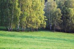 Het landschap van het de herfstlandschap, mooi panoramabos met avondzonlicht, gele en groene gras, zonneschijn, natuurlijk milieu royalty-vrije stock afbeeldingen