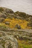 Het landschap van de de herfstrivier royalty-vrije stock foto