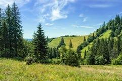 Het Landschap van de Karpaten stock foto's