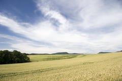 Het Landschap van de landbouw Stock Fotografie