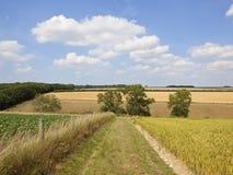 Het landschap van de lapwerkzomer met Asbomen en grasrijk spoor stock fotografie