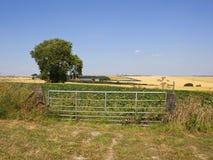 Het landschap van de lapwerkzomer met de poort van het metaallandbouwbedrijf en asboom stock foto's