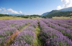Het landschap van de lavendel Royalty-vrije Stock Afbeeldingen