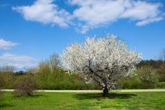Het landschap van de lente Stock Afbeeldingen