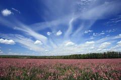 Het landschap van de lente. Royalty-vrije Stock Afbeelding
