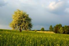 Het landschap van de lente royalty-vrije stock foto's