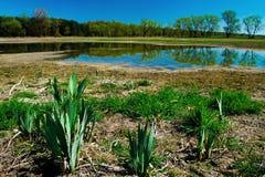 Het landschap van de lente Stock Fotografie