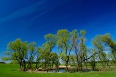 Het landschap van de lente Stock Foto