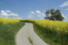 Het landschap van de lente. Bloeiend raapzaadgebied. Royalty-vrije Stock Fotografie
