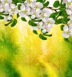 Het landschap van de lente Bloeiende peer Royalty-vrije Stock Foto