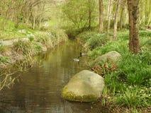 Het landschap van de lente royalty-vrije stock afbeelding