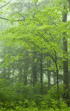 Het Landschap van de lente, Groot Rokerig Mtns Nationaal Park, TN Royalty-vrije Stock Fotografie