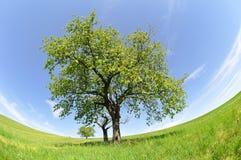 Het landschap van de lente in het nationale park Sumava Stock Foto