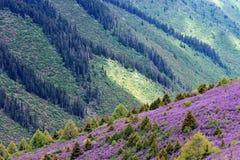 Het landschap van de lente met bloeiende roze bloemen Royalty-vrije Stock Afbeeldingen