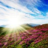 Het landschap van de lente met de bewolkte hemel en de kleuren Stock Foto's
