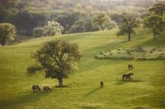 Het landschap van de lente met paard bij avond royalty-vrije stock afbeelding