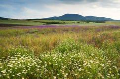 Het landschap van de lente met wilde bloemen Royalty-vrije Stock Foto's