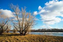 Het landschap van de lente Naakte bomen op de rivierbank Stock Afbeelding