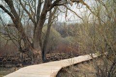 Het landschap van de lente promenade door droog moerasland onder naakte bomen en struiken in donker weer royalty-vrije stock foto