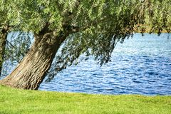 Het landschap van de lente Rivierbank en de takken van bomen die over hem hangen stock foto's